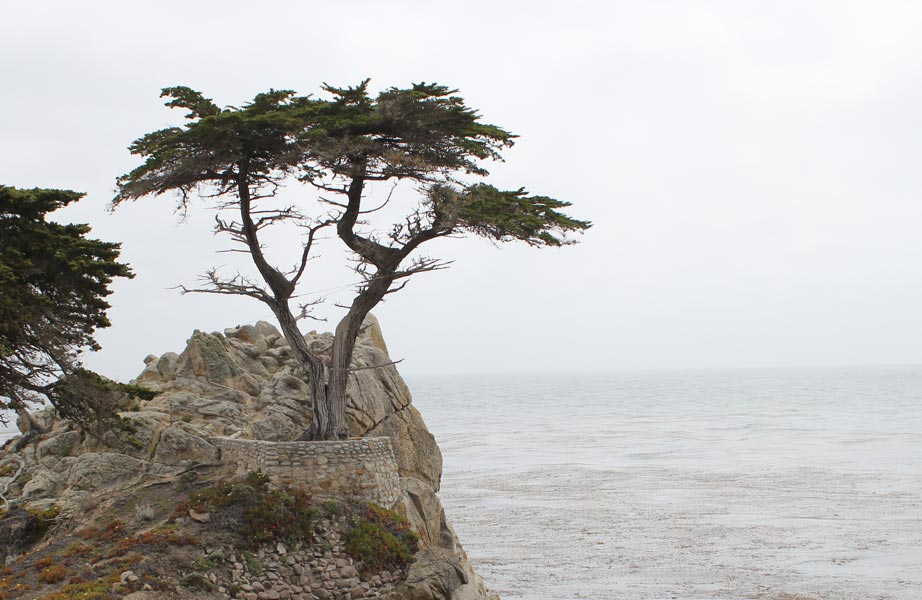 Pebble Beach Tree